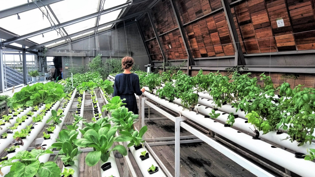 As indoor agriculture gains prominence, LED lighting will play an integral role.